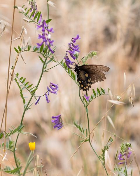 butterfly-on-plant.jpg