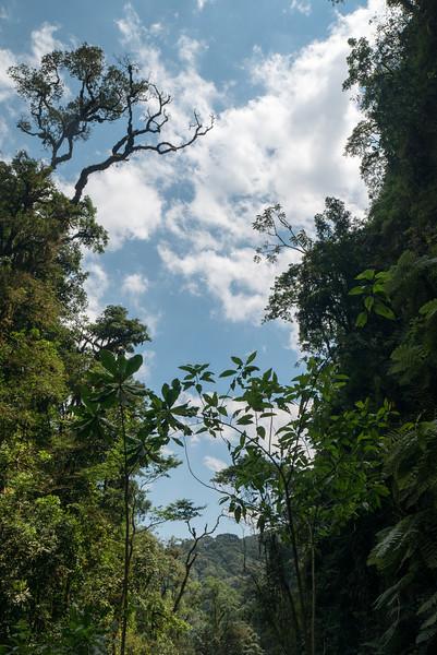 Nyugwe-Rwanda-42.jpg