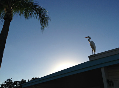 Dunedin, Florida - 2013
