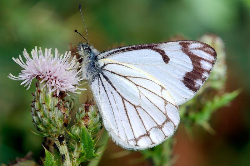 butterflyandcrabspider.jpg