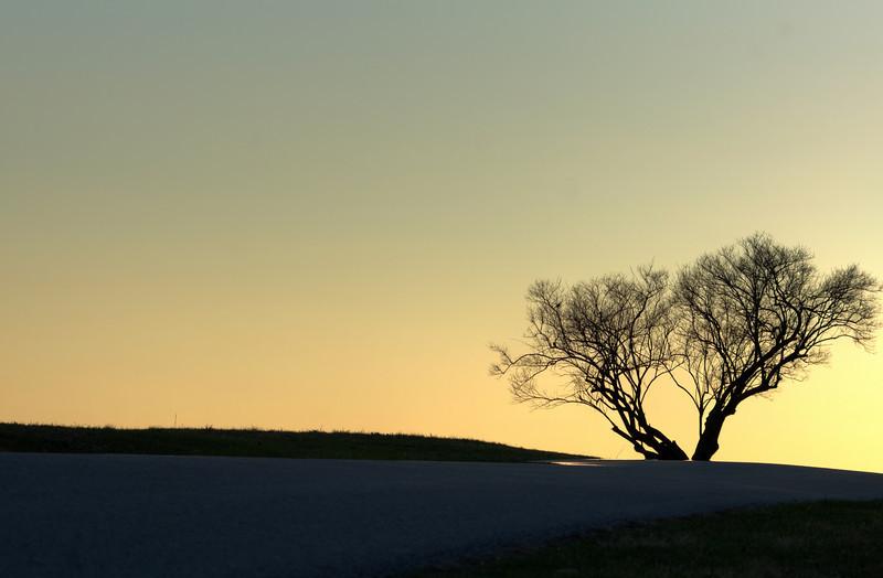 tree in vfnp.jpg