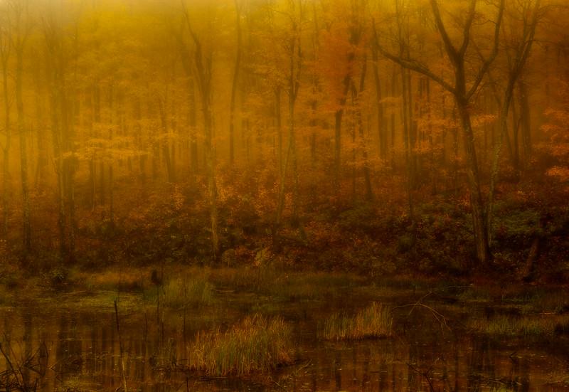 Autumn swamp in fog-impression_Oct 14-2011_01 (2 of 2).jpg