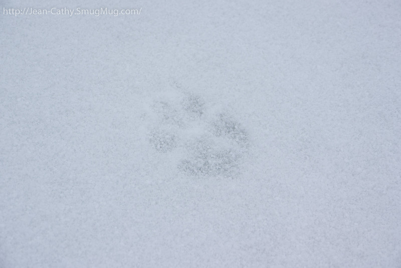The Apex predator of Algonquin Park leave his mark.
