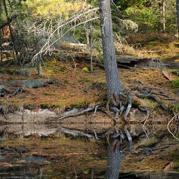 Branched Waters Edge.jpg
