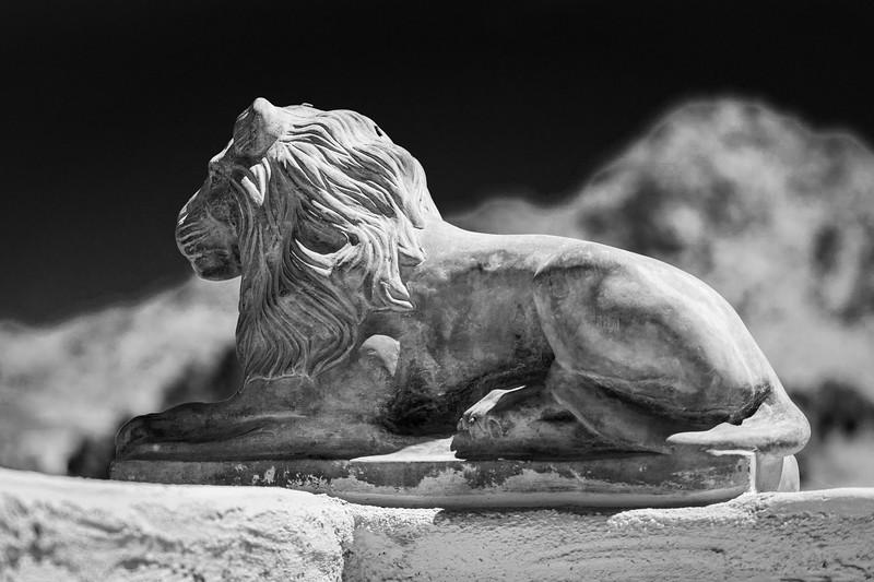 AZ lion-1.jpg