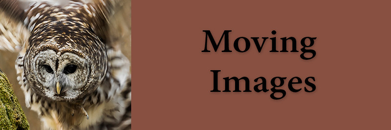 revised 1x3 Moving Images Tab.jpg