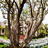 backyard weddings in southern california