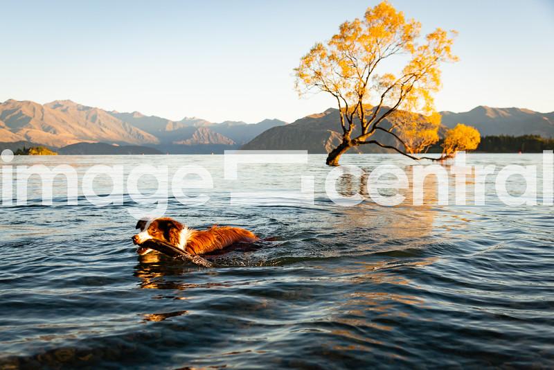 Lake Wanaka, Central Otago