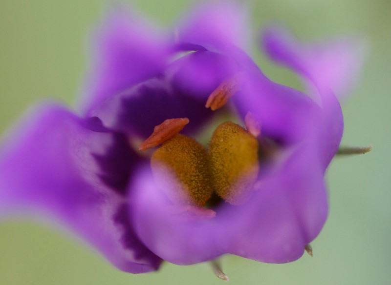 looking down into a purple flower blowing in the wind