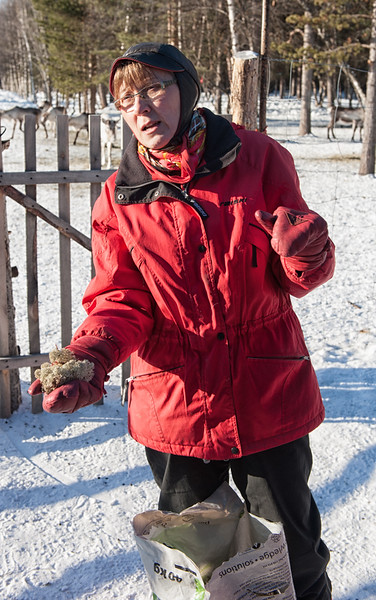 Tula with the Reindeer's Lichen