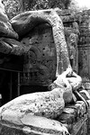 Creeper at Tha Phrom