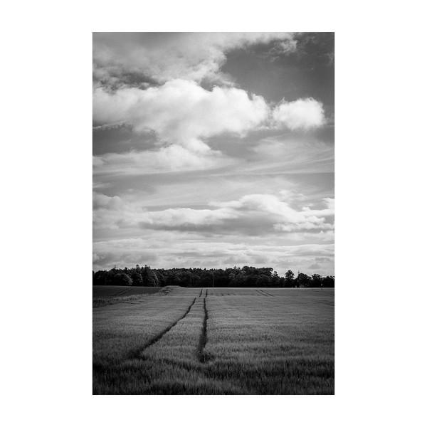 182_Field_10x10.jpg