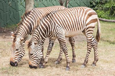 7.17.16 Racine Zoo