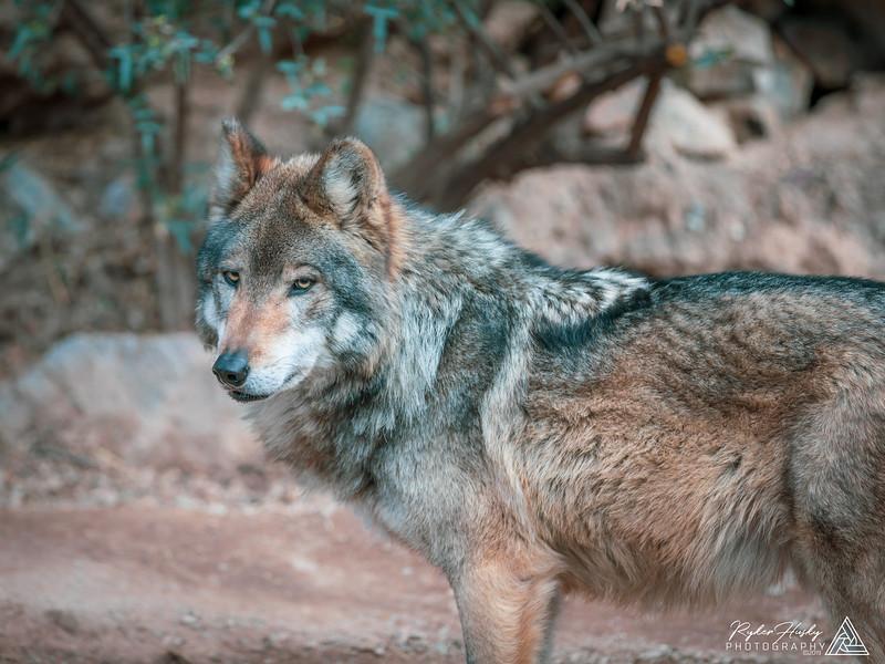 Arizona-Sonora Desert Museum-163.jpg