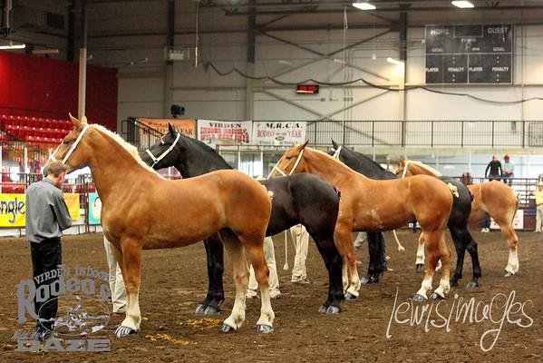 Virden Draft Horse Futurity - Halter