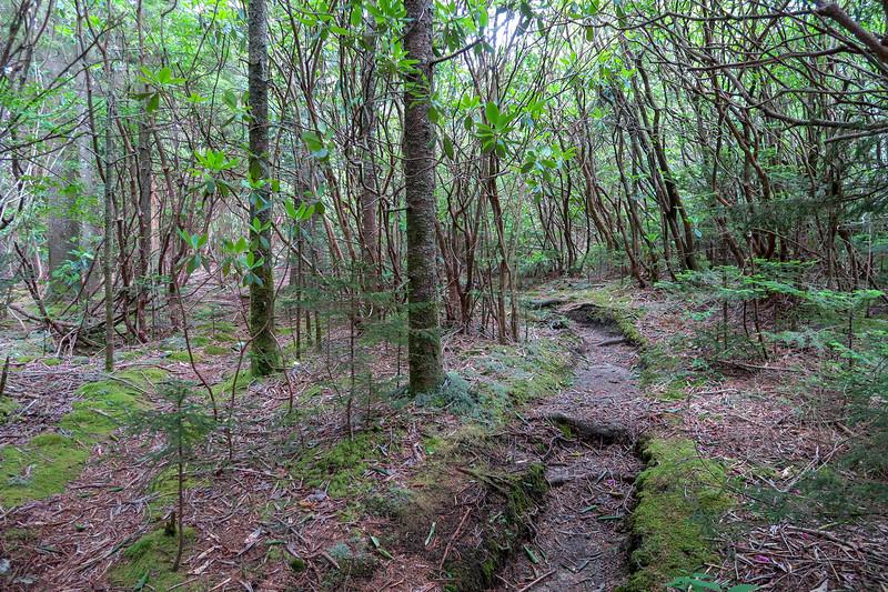 Mountains-to-Sea Trail -- 5,550'