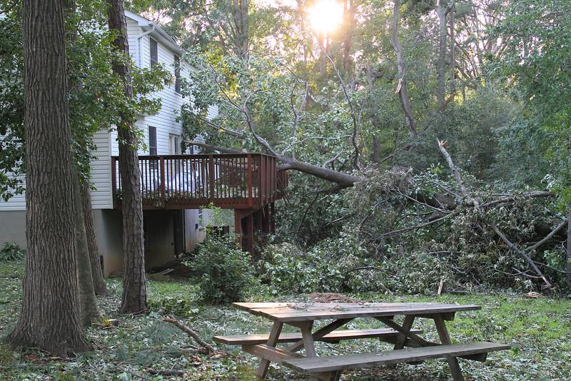 Right NEXT door ANOTHER tree has fallen on their neighbor's deck!