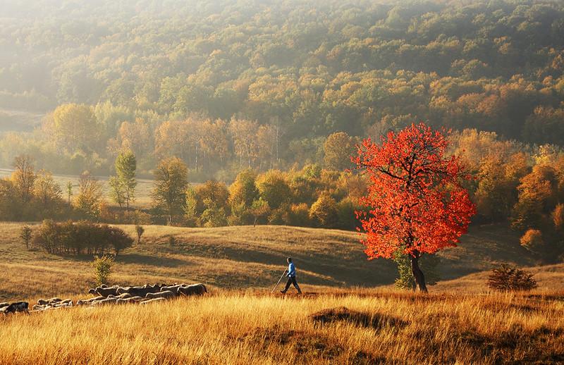 Autumn Pastoral