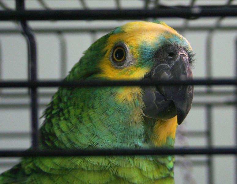 6899 LHStomp parrot.jpg