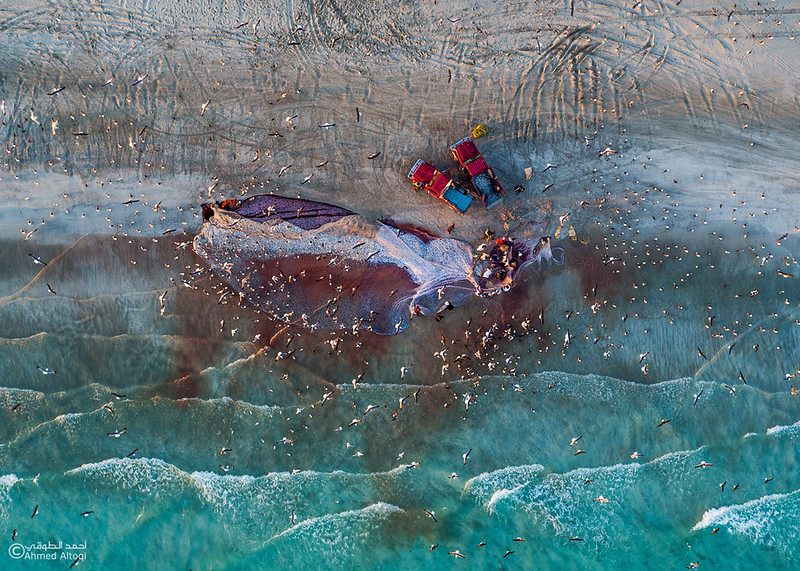 Sardine Season (34)- Dhofar.jpg