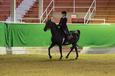 157 - Walk/Trot Saddle Seat Equitation Open