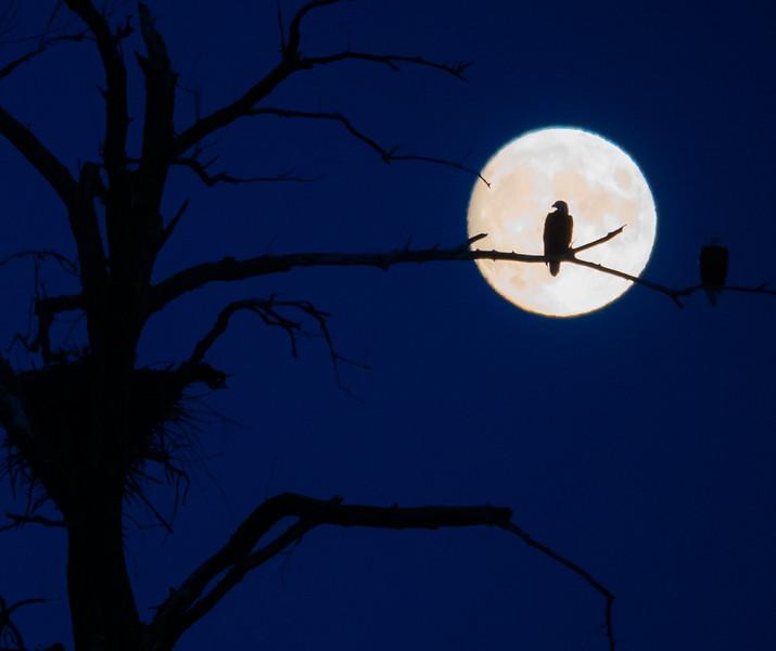 08-31-2020-eagle-moon-5.jpg