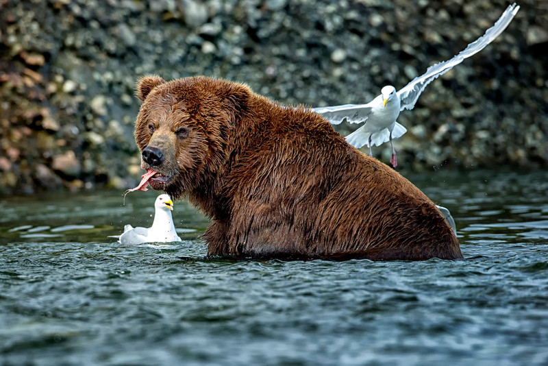 Alaska_2014_FH0T7475.jpg