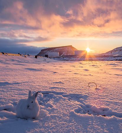 Operation IceBridge 2016 Arctic
