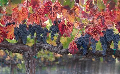 grapevine meditations