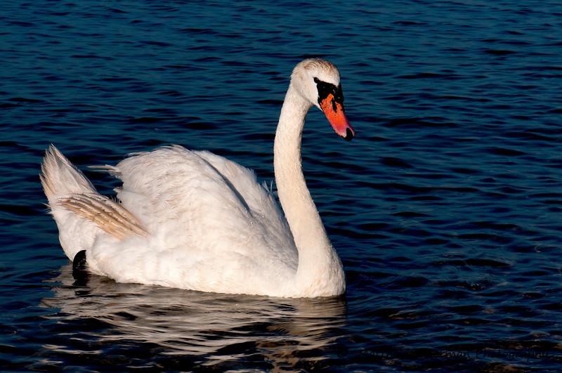 410 Swan MAT_6152.jpg