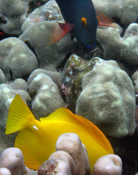 476- 20080416- Hawaii 20-Snorkelling IMG_0679.jpg