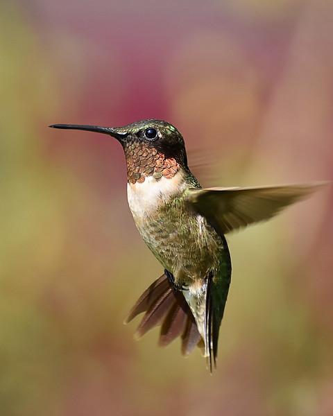 A little flying jewel!!