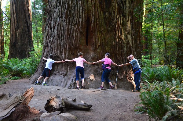 Redwood Forest August 2017
