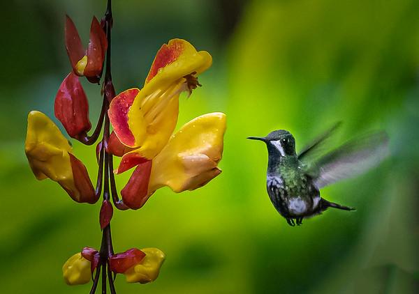 Ecuador Rain Forest