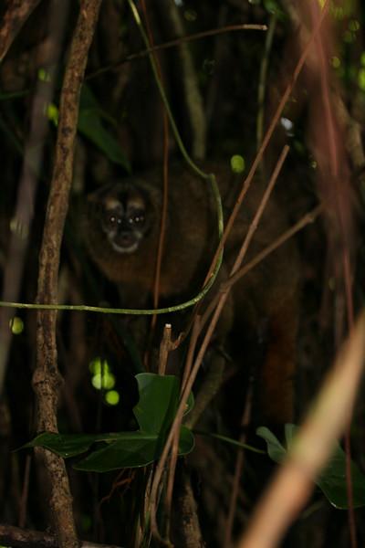 2006-02-21-0018-Thompson Family Adventures trip to Panama with Hahns-Day 4-Bocas del Toro, Salt Creek-Night Monkey.jpg