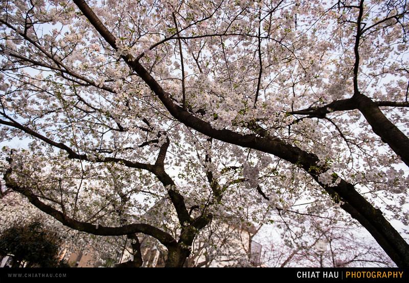 Japan_Tokyo_Apr_2016-169.jpg