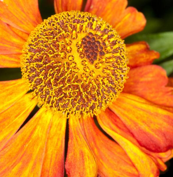Flower_4978060536_o_8179007823_o.jpg