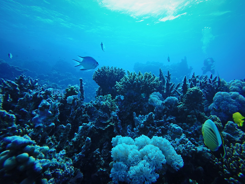 Scuba Diving and Snorkeling in Egypt
