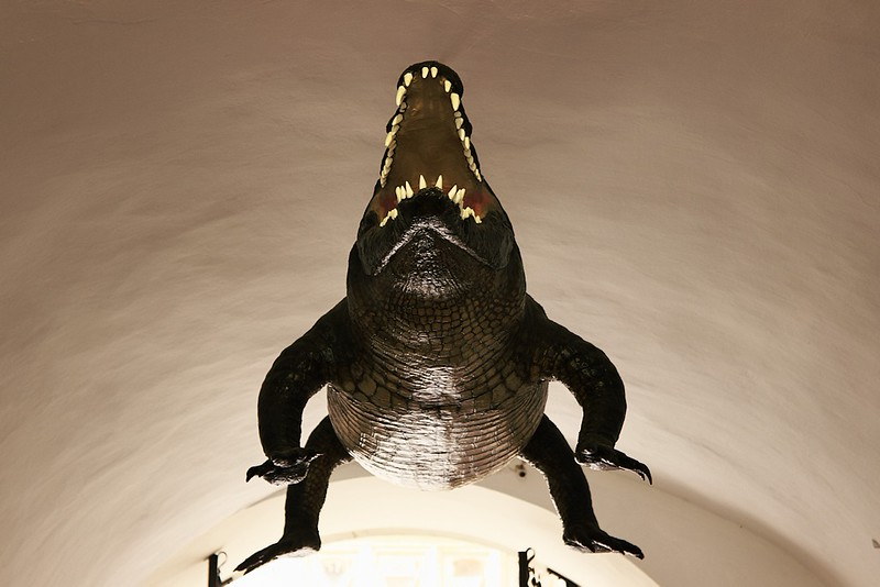 Chudák krokodýl, on se tak těšil...