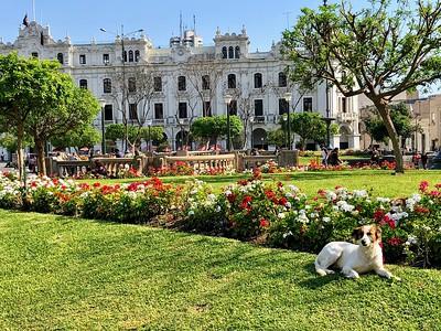 Pups of Peru
