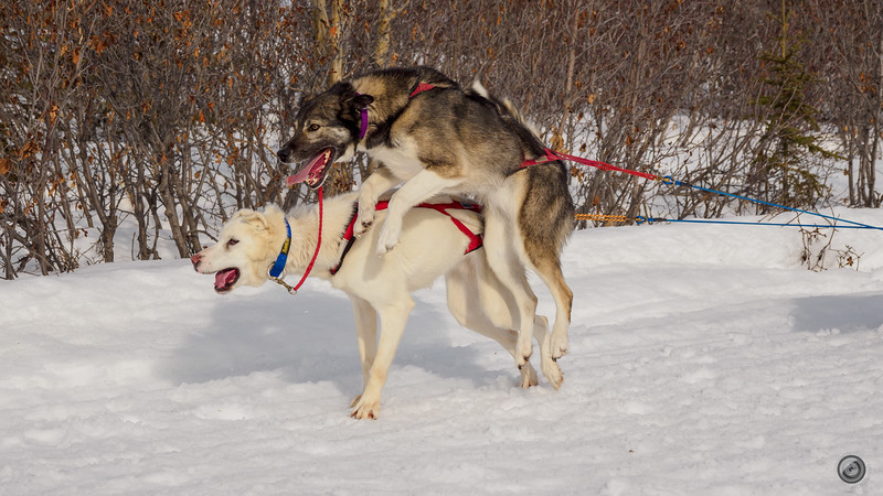 20190325_Blaire_and_Liz_Mushing_28.jpg