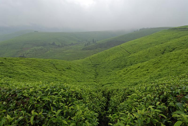 070113 3992 Burundi - Teza Mountains and Tea fields _E _L ~E ~L.JPG