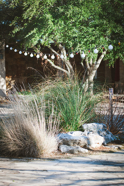 Lady Bird Wildflower Center