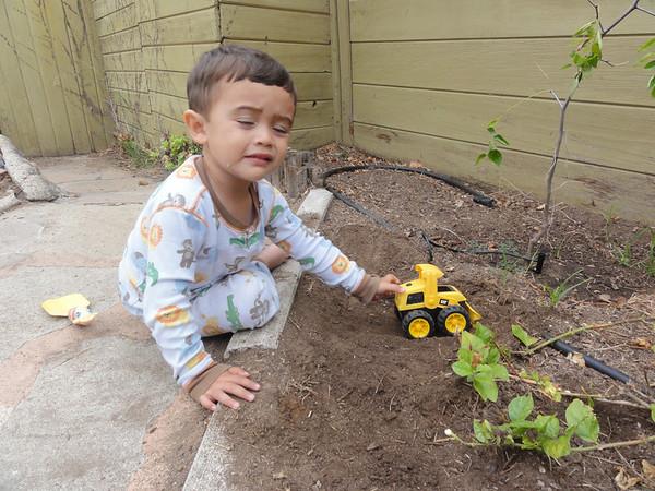 Arthur Digging Dirt in the Morning