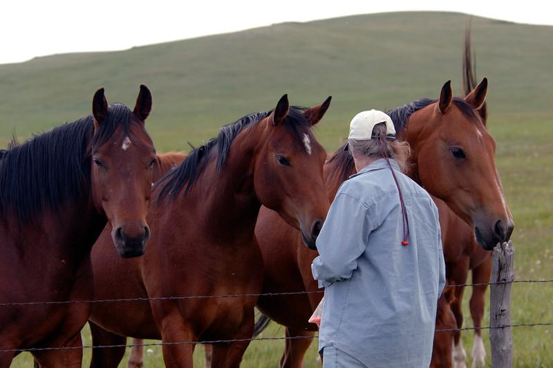 Heidi found some friendly horses