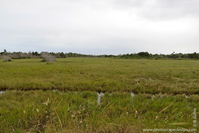 Merritt Island National Wildlife Refuge - Brevard County