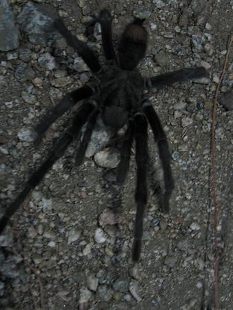 2008-08-05 - Verdugos