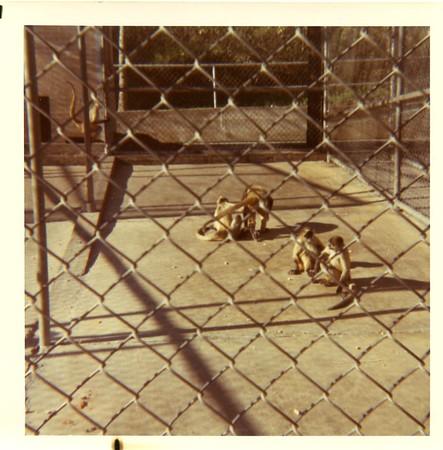 1969 Marsailles Zoo Dallas TX