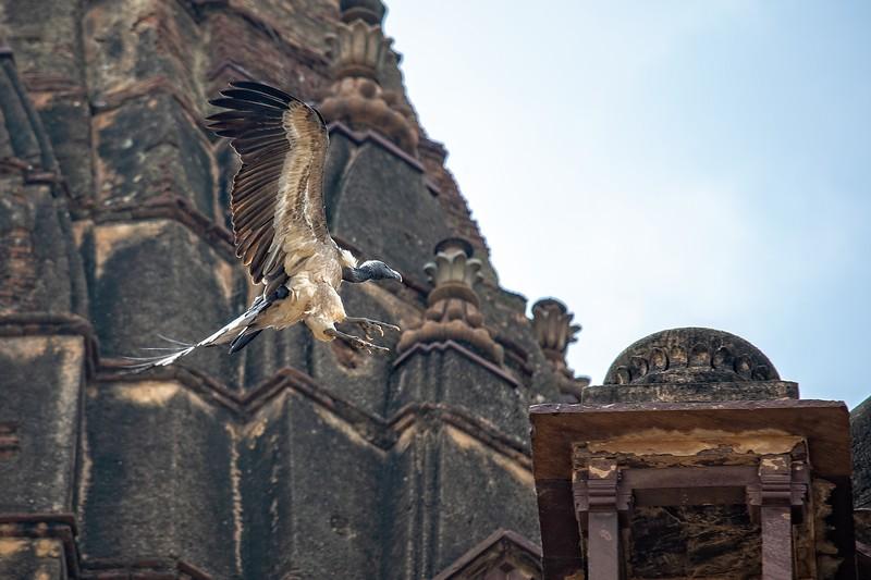 Vulture Landing, Cenotaphs, Orchha