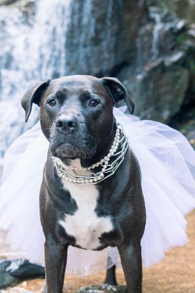 Schiavetto_WeddingPhotographer-141.jpg